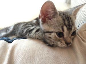 退屈なネコ